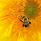 bee 1 by telley20