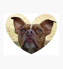 Red Nose Pit Photographic Print
