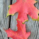 fall 2 by telley20
