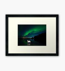 Balto and the aurora. Framed Print