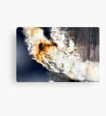 A consummate and corroded rusty nail Metal Print