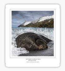SOUTHERN ELEPHANT SEAL (Mirounga leonina) DIGITAL PAINTING. NOT A PHOTOGRAPH Sticker