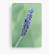 Lavender on muted green Metal Print