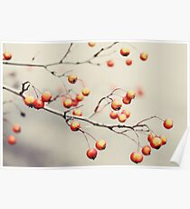 berries in the woods Poster