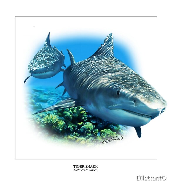TIGER SHARK 2 by DilettantO