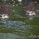Mischievous River Otters by NatureExplora