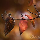 Autumn Dogwood Leaves by NatureExplora