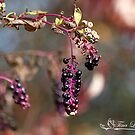 Autumn Pokeweed III by NatureExplora