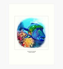 NAPOLEON WRASSE 1 Art Print