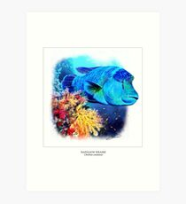 NAPOLEON WRASSE 4 Art Print