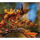 Golden leaf by PHILIP H.P. WONG
