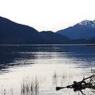 Lake Te Anua, Quiet Mood by Catherine Davis