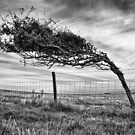 Prevailing winds by Geoff Carpenter