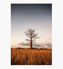 Kimberley Boab Tree Photographic Print