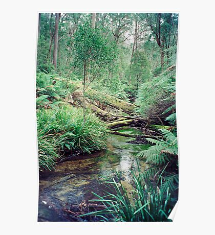 Mongarlowe River, Monga State Forest Poster