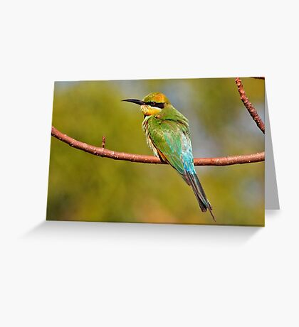 Rainbow Bee-eater ~ The Spectrum Greeting Card