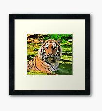 Bathing Tiger Framed Print
