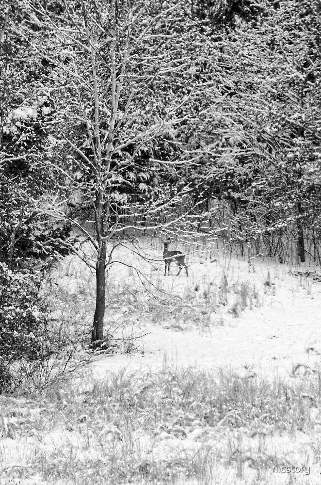 Peering Out - Deer BW by mcstory