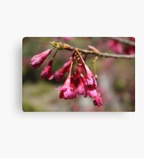 Crimson Flower Canvas Print