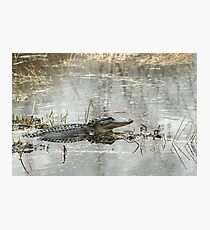 Gator Day Photographic Print