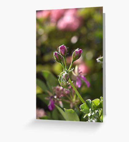 flower-geranium buds Greeting Card