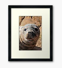 Seal sunbathing Framed Print