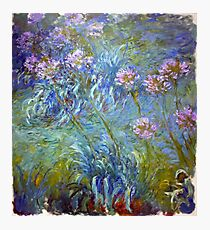 Agapanthus - Claude Monet  Photographic Print
