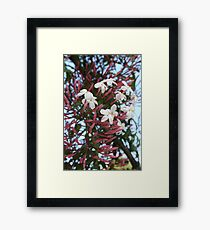 Pink Buds and Jasmine Blossom Close Up Framed Print