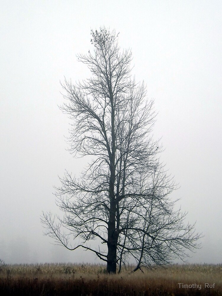 Lonely Tree in Fog by Timothy  Ruf
