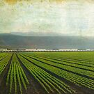 Strawberry Fields Forever by Honey Malek