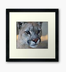 12014 puma Framed Print