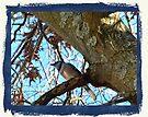 Blue Jay by FrankieCat