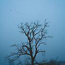 Snowy Solitude  by Dfeivor