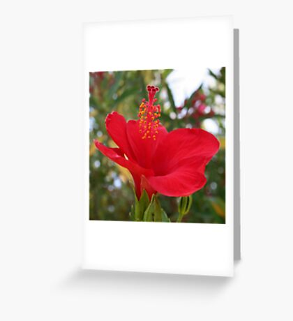 Soft Red Hibiscus With Natural Garden Background Greeting Card