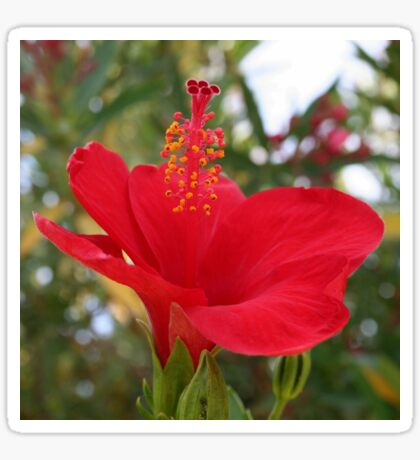 Soft Red Hibiscus With Natural Garden Background Sticker