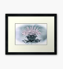 Muted Colors Bee Balm Framed Print