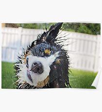 Dog bath! Poster