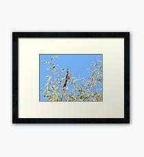 Female Phainopepla Eyeing the Morning from Her Tree Framed Print