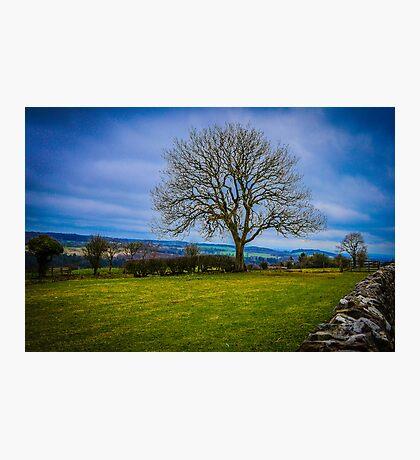 Tree - Hadrian's Wall Photographic Print
