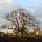 Leafless oak by KatDoodling