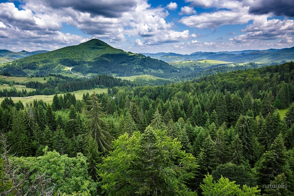 Mountains covered in pine trees by naturalis