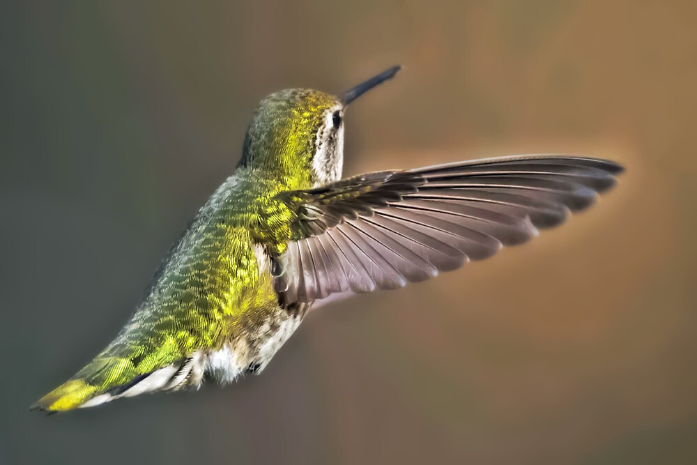 Mighty Wing by Kenneth Haley