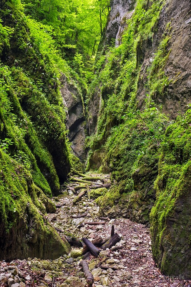 A beautiful view of a narrow wild canyon by naturalis