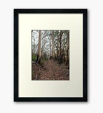 Mountain Ash Trees 1 Framed Print
