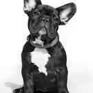 Puppy by Dobromir Dobrinov