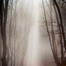 Misty forest by Dobromir Dobrinov