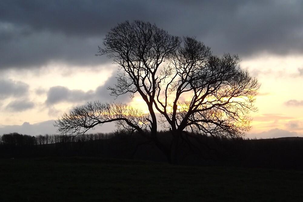 Solar Powered Tree by luigii