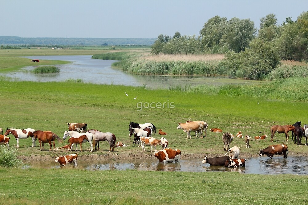 cows and horses on river by goceris