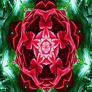 Rose Red by Scott Mitchell