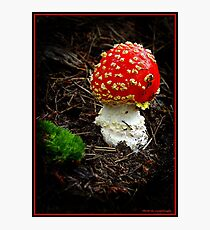 """Red Cap"". Photographic Print"